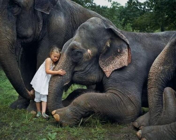 Hayvanların tatlı prensesi: Amelia