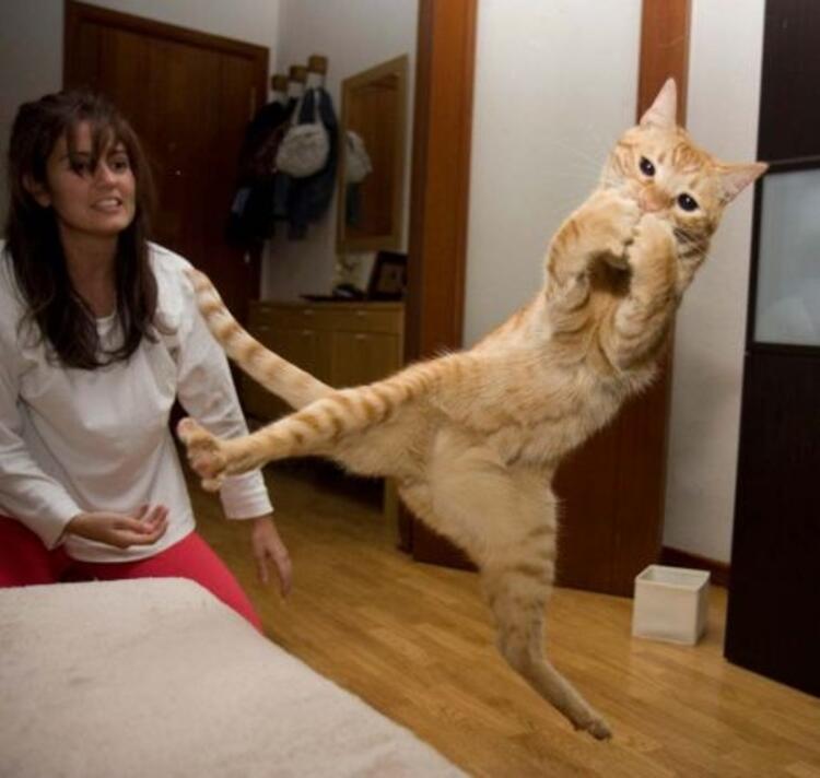 Bu kediler resmen uçuyor