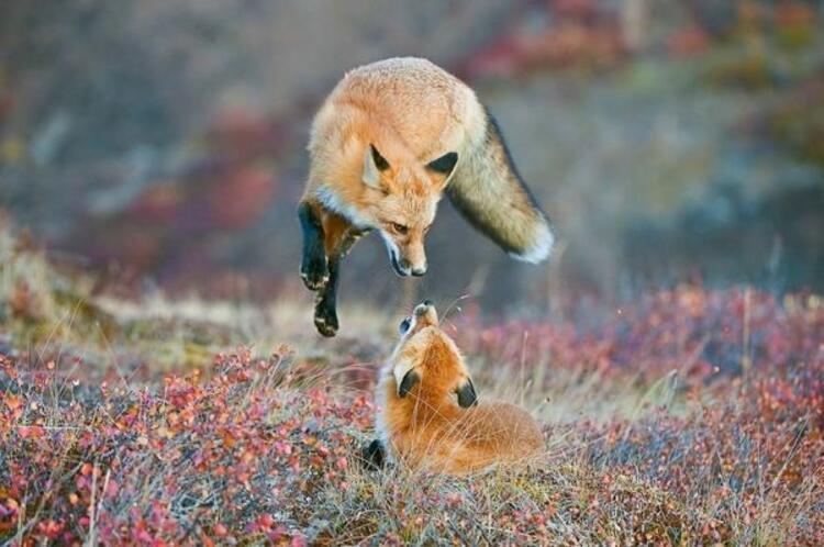 Vahşi doğaya yakından bakmaya ne dersiniz