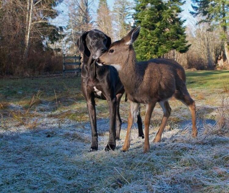 Köpek Kate ve geyik Pippin