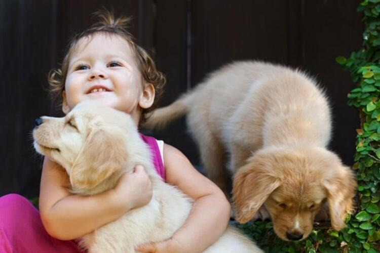 Köpeklerin arkadaş canlısı olduklarını gösterin