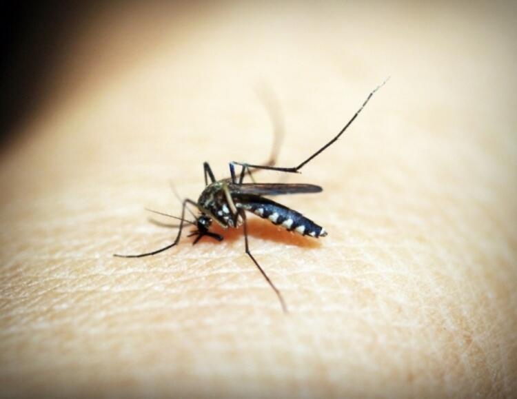 Böcekleri uzak tutar
