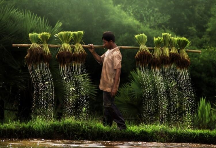 Çiftçi adam - Vietnam