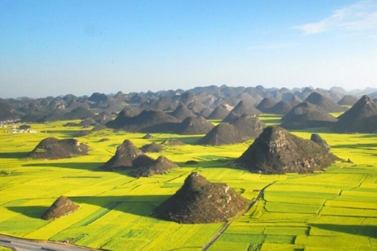 Luoping Kanola alanları - Çin