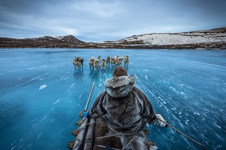 Kızak çeken köpekler - Grönland