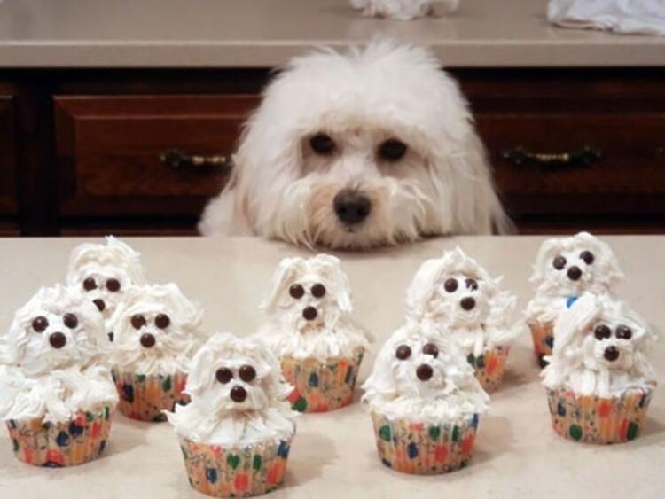 Yavru köpek görünümlü cupcakeler