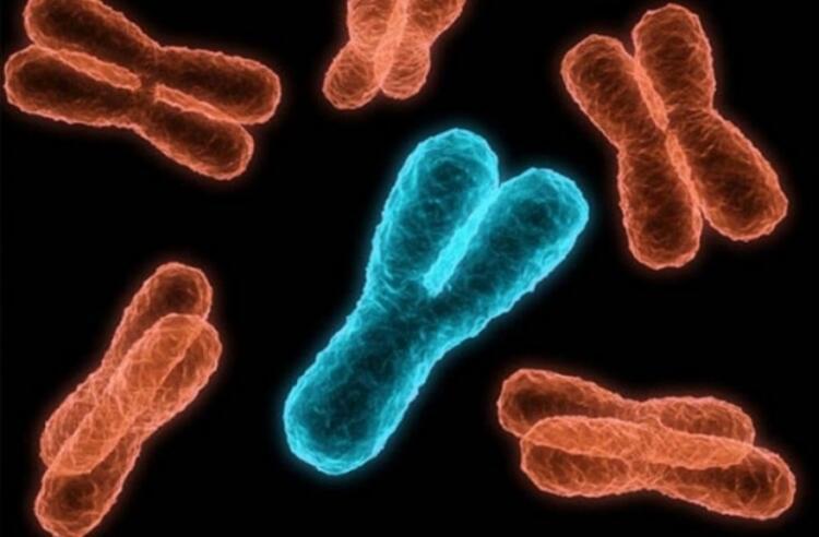 Y kromozomu kaybolursa