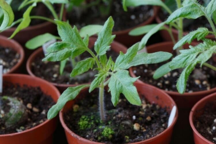 Bitkilerinizi besler