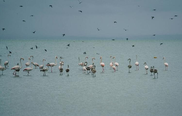 Su kuşlarını yakından gözlemleyebilirsiniz