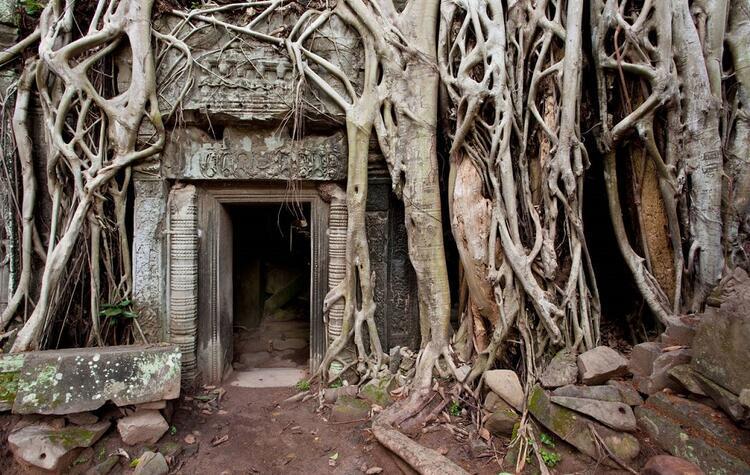 Ta Prohm Tapınağı - Kamboçya