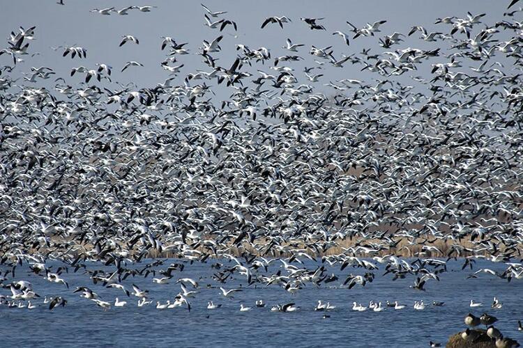 Kuş göçlerinin kavşak noktası: Belen Geçidi