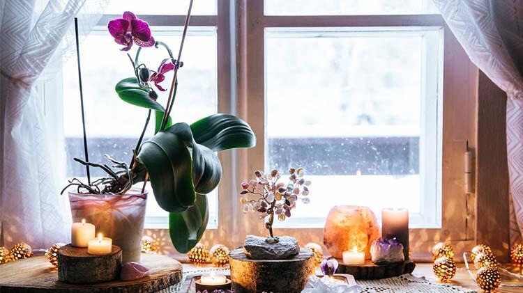 Kova = Orkide