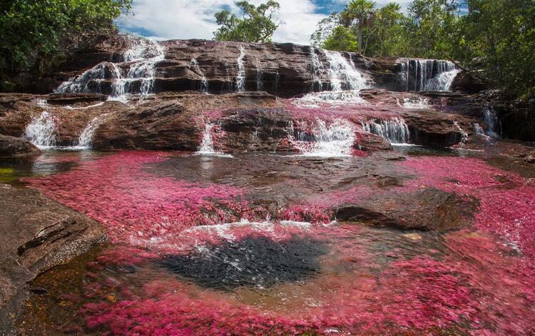 Kolombiya'daki Cano Cristales Nehri