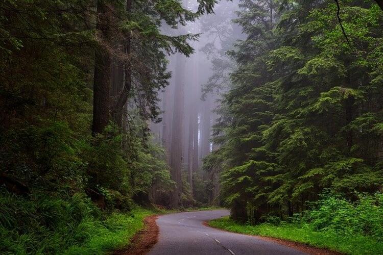 Kaliforniya, Redwood Ulusal Parkı