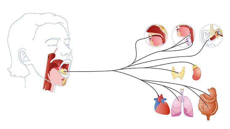 Vagus siniri ne işe yarar