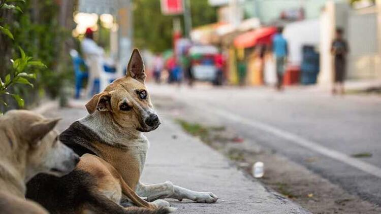 SORU: 2 - Sokak hayvanlarını besleyecek olanlar sokağa çıkma kısıtlamaları sırasında nasıl davranmalılar