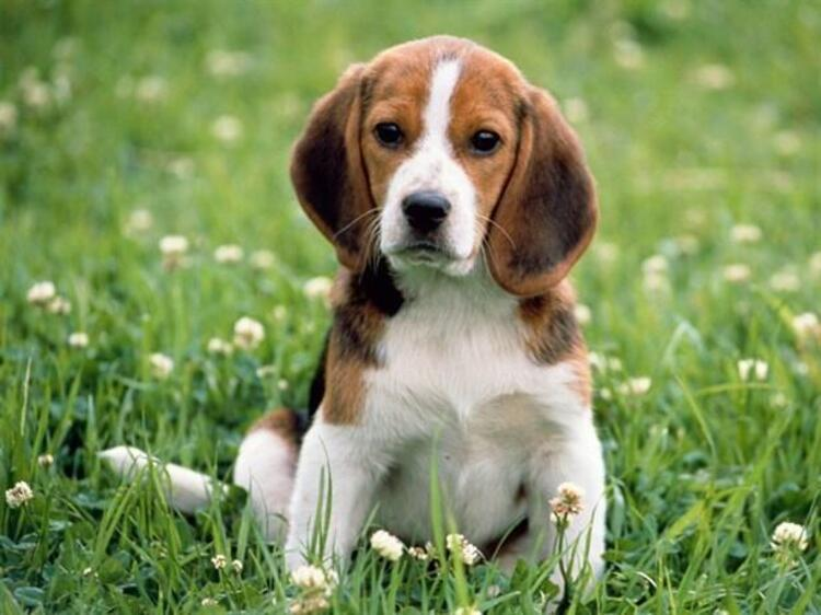 Save a Dog bağışı kampanyası nedir? 17