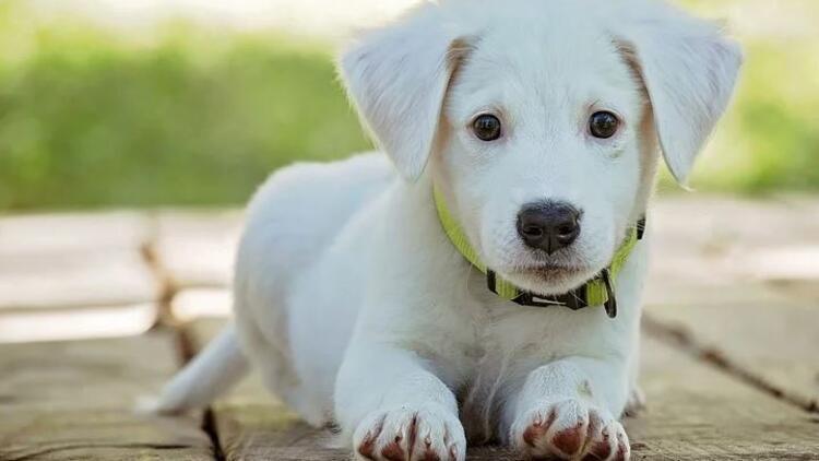 Save a Dog bağışı kampanyası nedir? 18