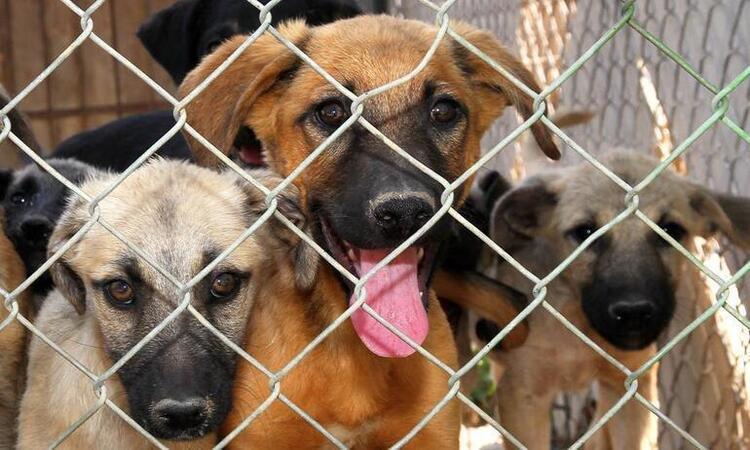 Save a Dog bağışı kampanyası nedir? 16