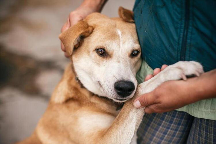 Save a Dog bağışı kampanyası nedir? 15