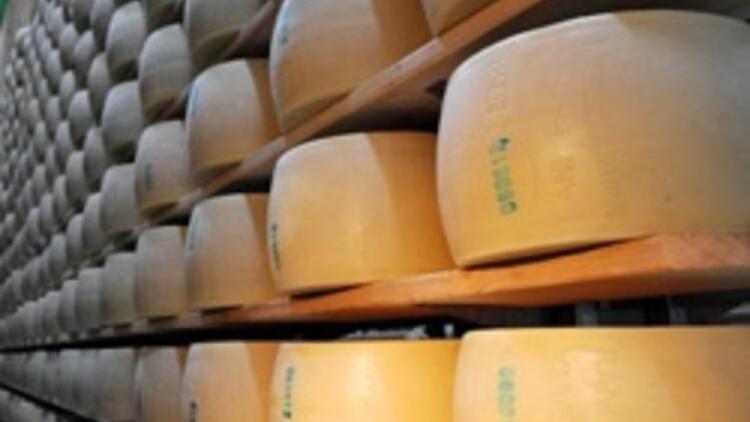 Parmesan peynirleri Antalya'da üretiliyor