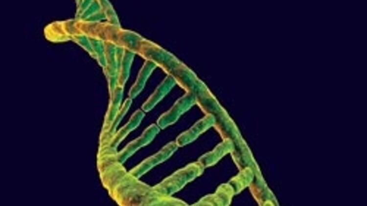 Türklere özel bir genom bulunamadı