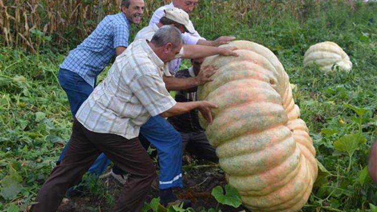 450 kiloluk bal kabağı yetiştirdi