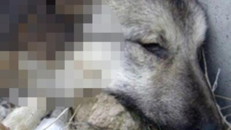 'Köpekler tecavüz edilip, yakıldı'