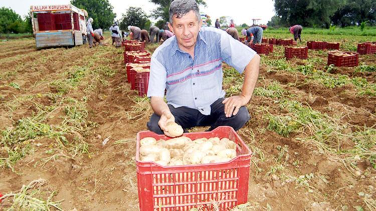 Patateste pazarla tarla fiyatlarında yüzde 300 fark