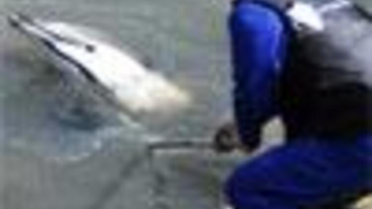 Dolphin trapped in the Golden Horn rescued by local construction workers