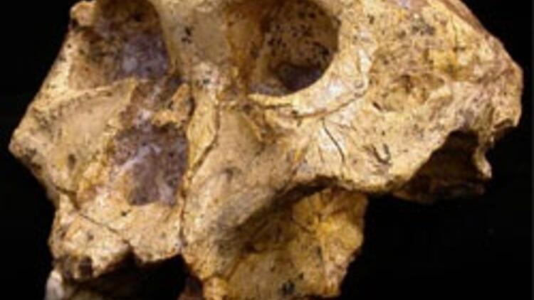 2 milyon yıl önce kadınlar erkekleri istemeye gidiyormuş