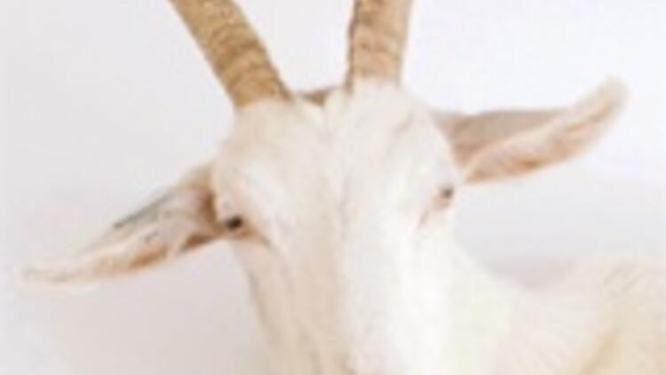 Keçiyle evlenen adam dul kaldı