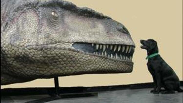 En büyük etobur dinozor keşfedildi