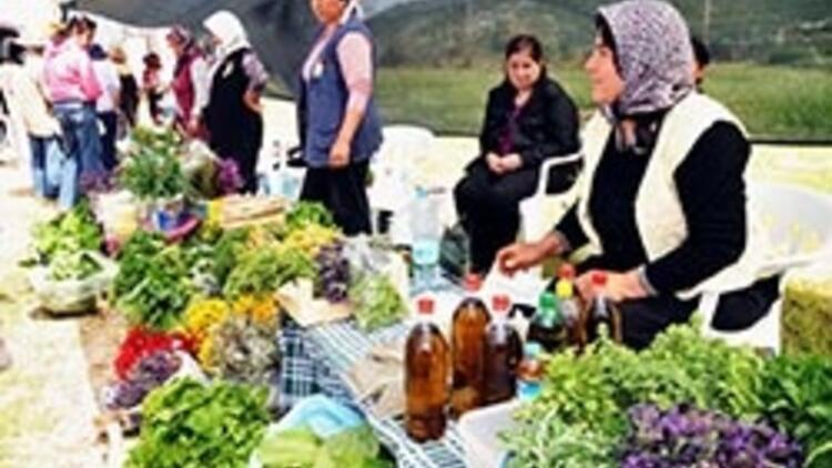 Çalgılı türkülü ot festivali