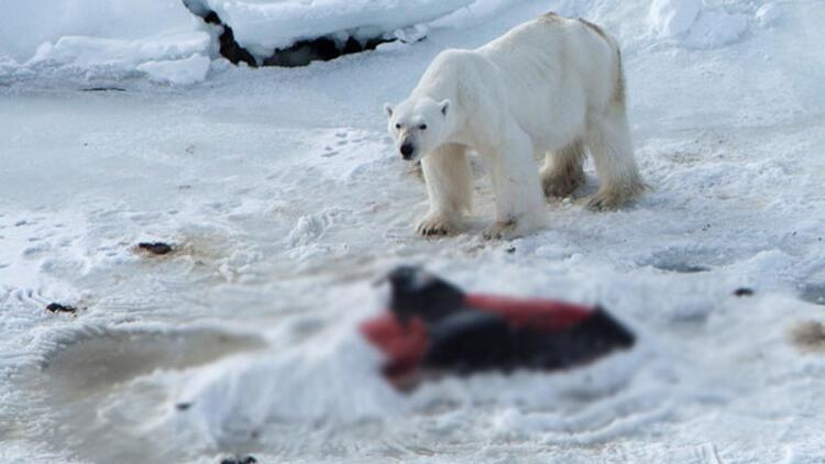 Küresel ısınma onları da etkiledi