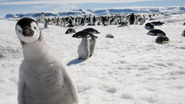 Türkiye Antarktika'ya açılıyor!