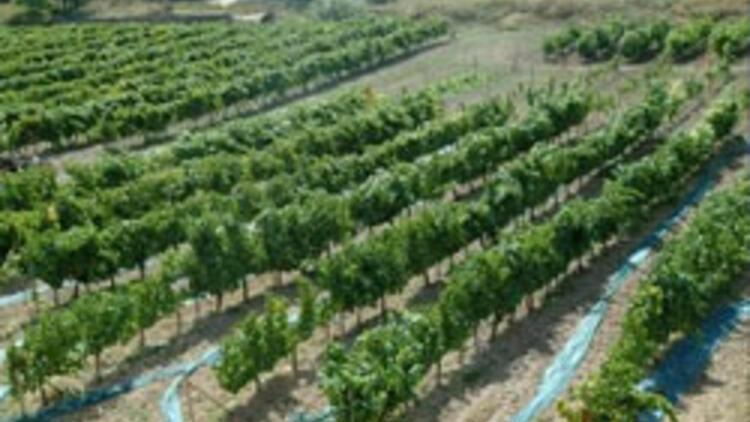 55 bin çiftçi organik tarıma geçti