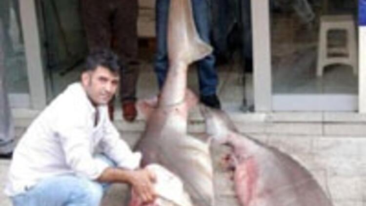 Dev köpek balıkları yakalandı