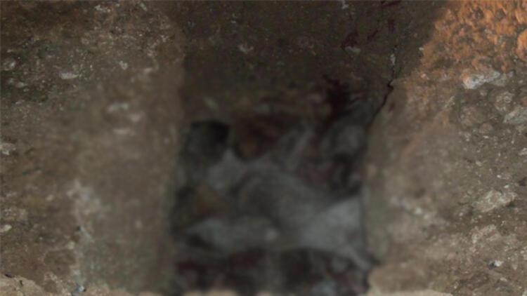 Uşak'ta köpek katliamı