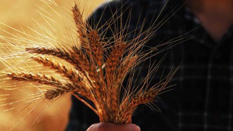 """""""Tarım ürünleri ithalatındaki artış rekolte kayıplarından"""""""