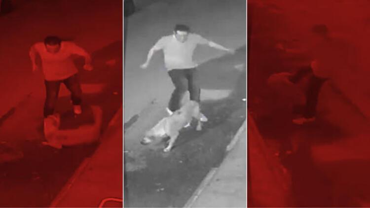 Köpeği tekmeledi sonra boğarak öldürdü