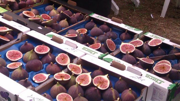 Bursa'dan İngiliz Kraliyet ailesine siyah incir