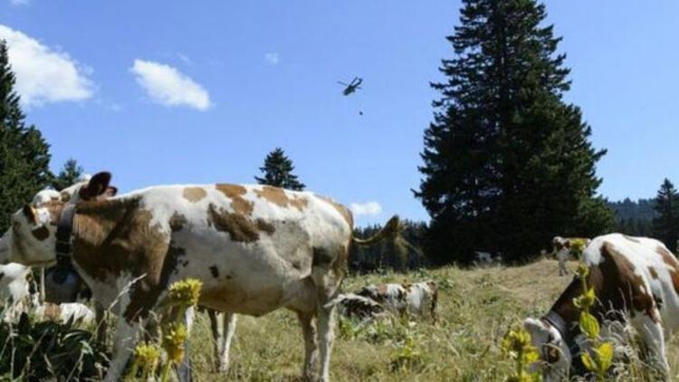 İsviçre Ordusu susuz inekler için Fransada operasyon yaptı
