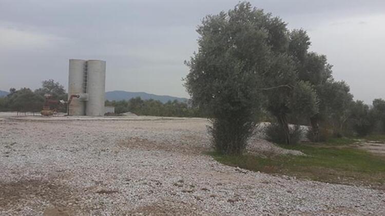 Aydın'da jeotermal enerji için zeytin ağaçları kesildi