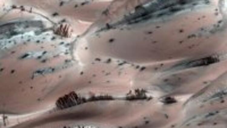 Mars'ta ağaç bulundu