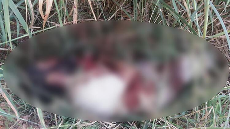 Anadolu Ajansı IŞİD'linin ceset fotoğrafını yayınladı