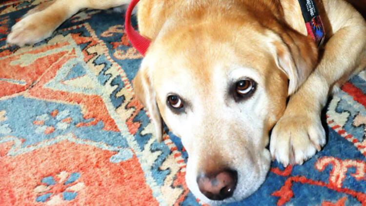 Bin liralık borcu için köpeği haczettiler
