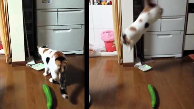 Kediler salatalıktan neden korkar