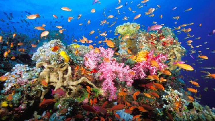 Mercanlar için 'tüp bebek' umudu - Avrupa Haberleri