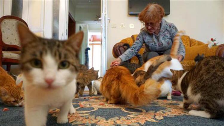 Kiraladığı evde 70 kediye bakıyor